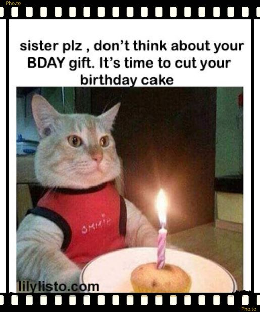 happy birthday cat meme for sister